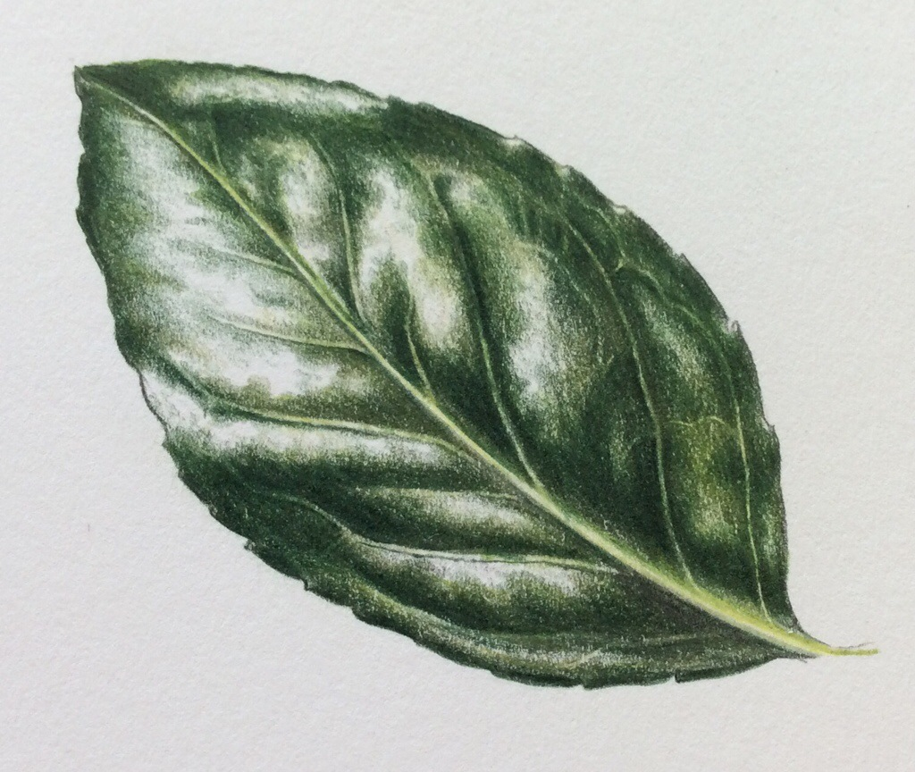Shiny Leaf Step-by-Step |