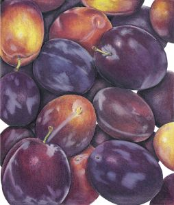 DarkPlums (2)